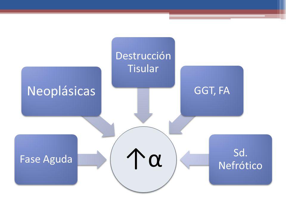 ↑α Fase Aguda Neoplásicas Destrucción Tisular GGT, FA Sd. Nefrótico