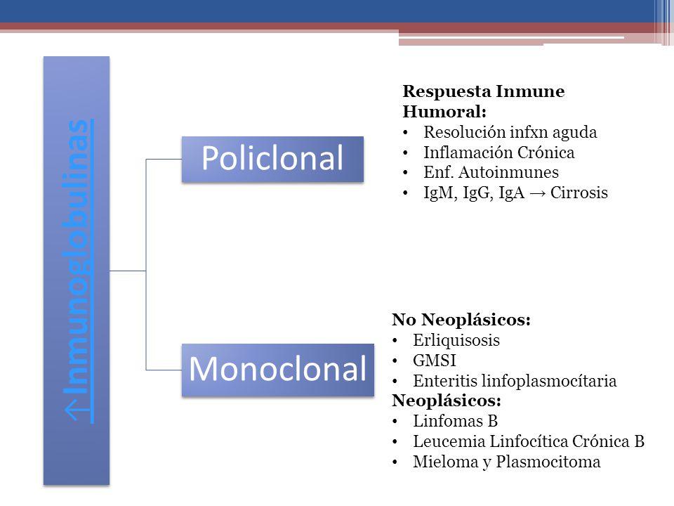 Policlonal Monoclonal ↑Inmunoglobulinas Respuesta Inmune Humoral: