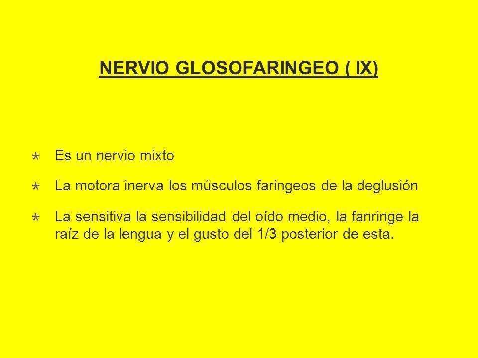 NERVIO GLOSOFARINGEO ( IX)