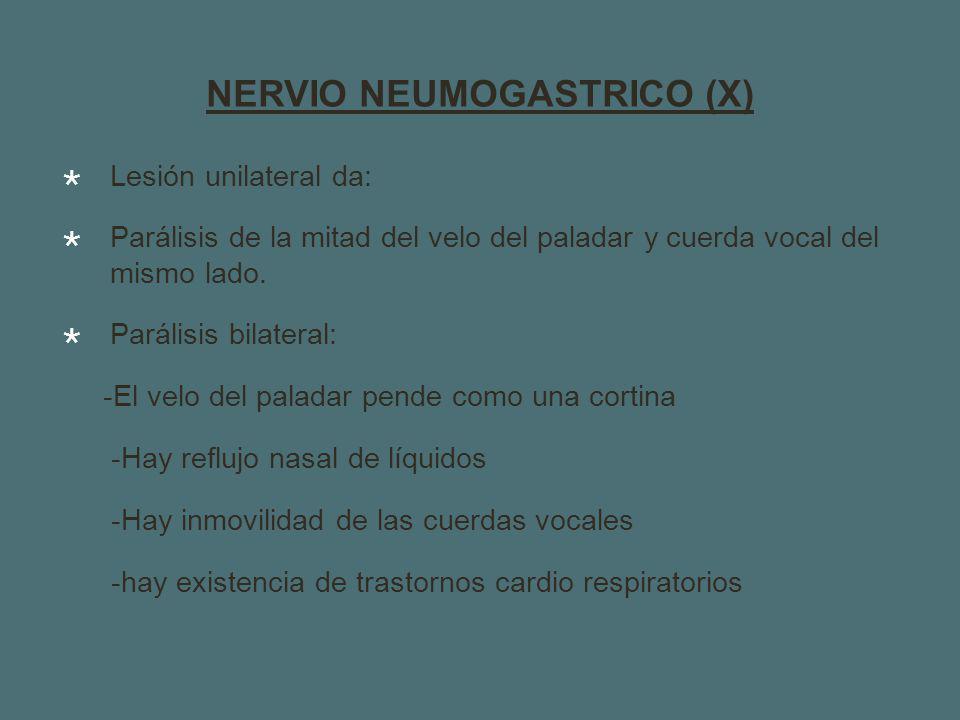 NERVIO NEUMOGASTRICO (X)