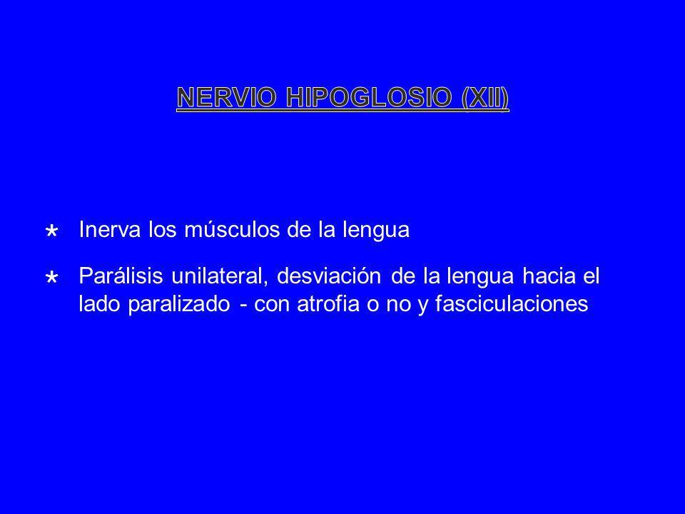 NERVIO HIPOGLOSIO (XII)