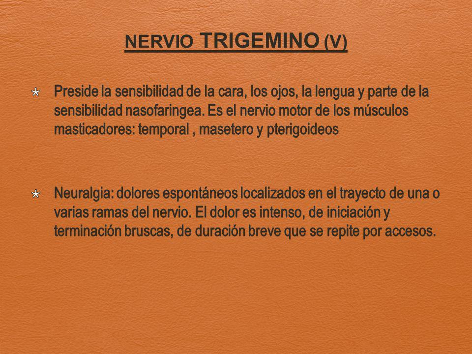 NERVIO TRIGEMINO (V)