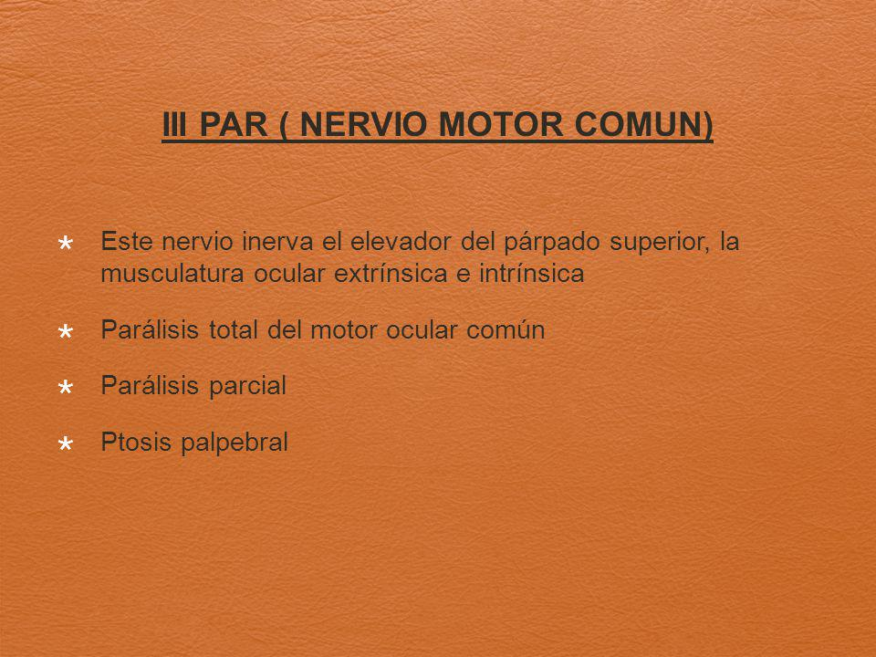 III PAR ( NERVIO MOTOR COMUN)