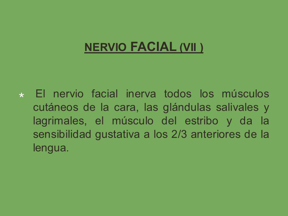 NERVIO FACIAL (VII )