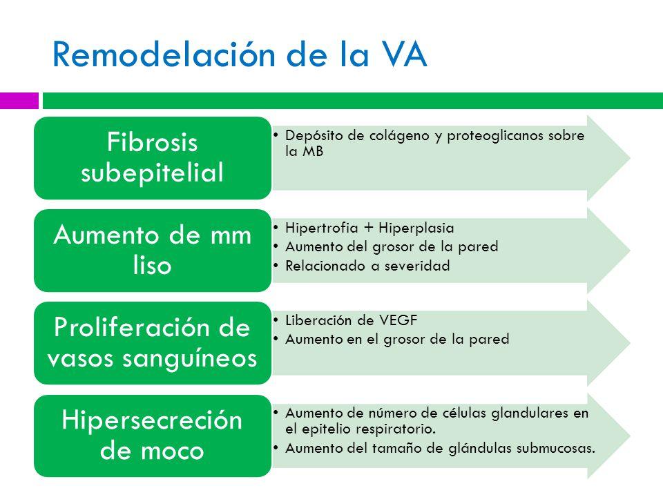 Remodelación de la VA Fibrosis subepitelial Aumento de mm liso