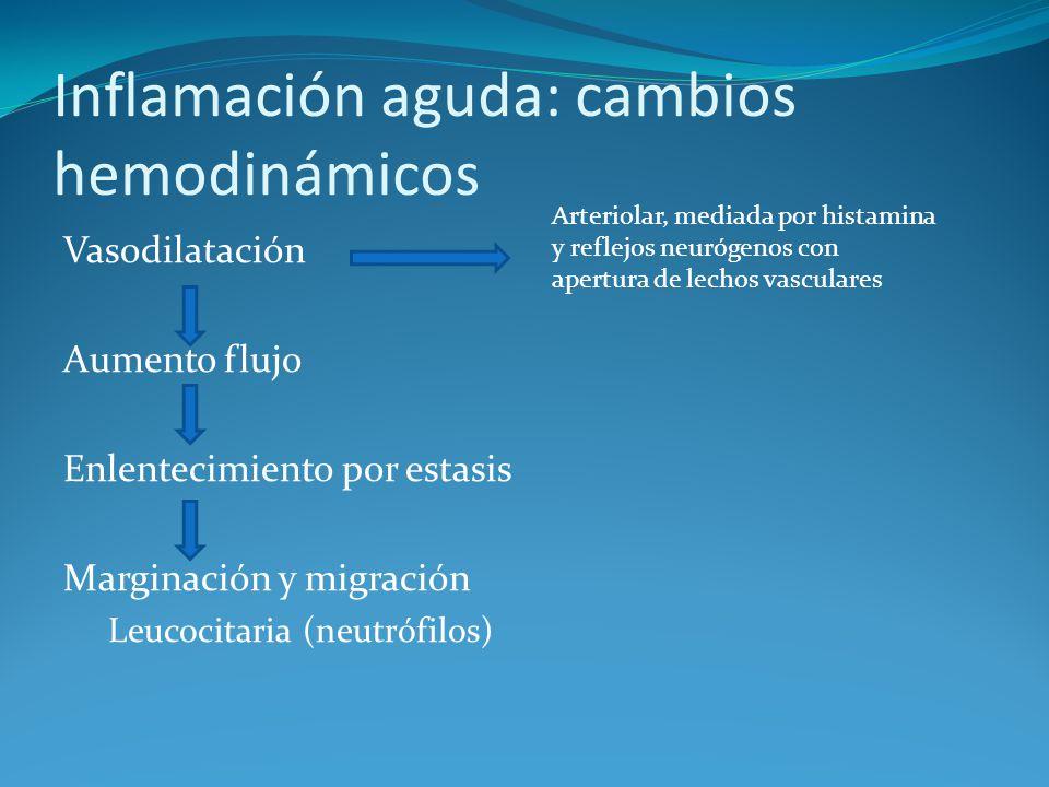 Inflamación aguda: cambios hemodinámicos