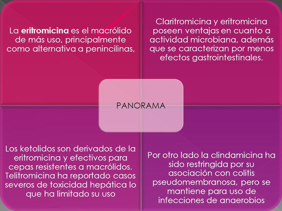 PANORAMA La eritromicina es el macrólido de más uso, principalmente como alternativa a penincilinas,