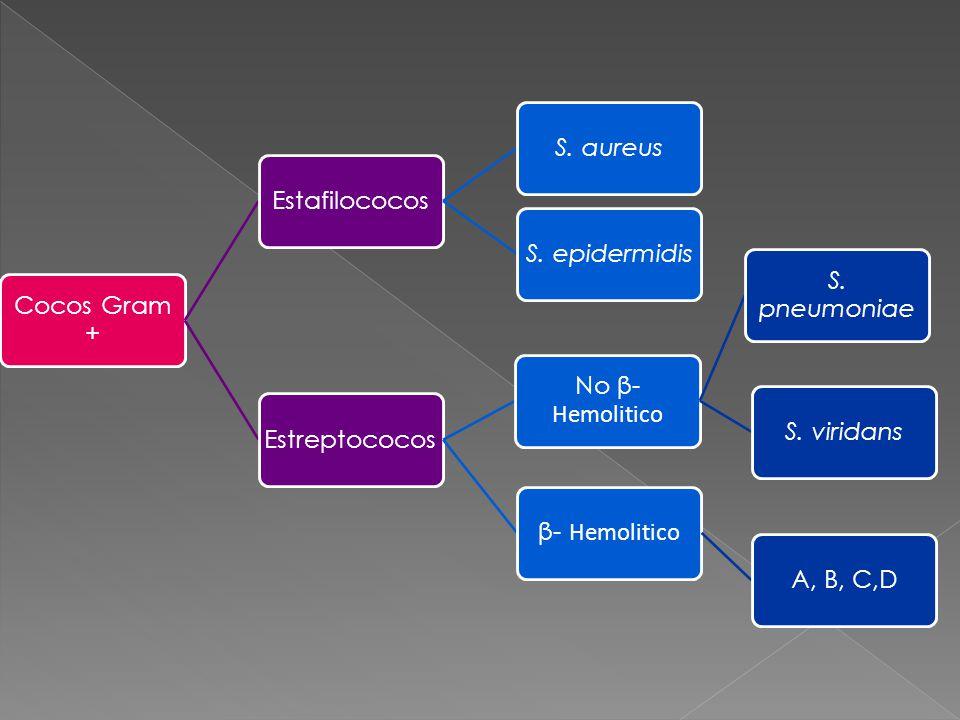 Cocos Gram + Estafilococos. S. aureus. S. epidermidis. Estreptococos. β- Hemolitico. A, B, C,D.