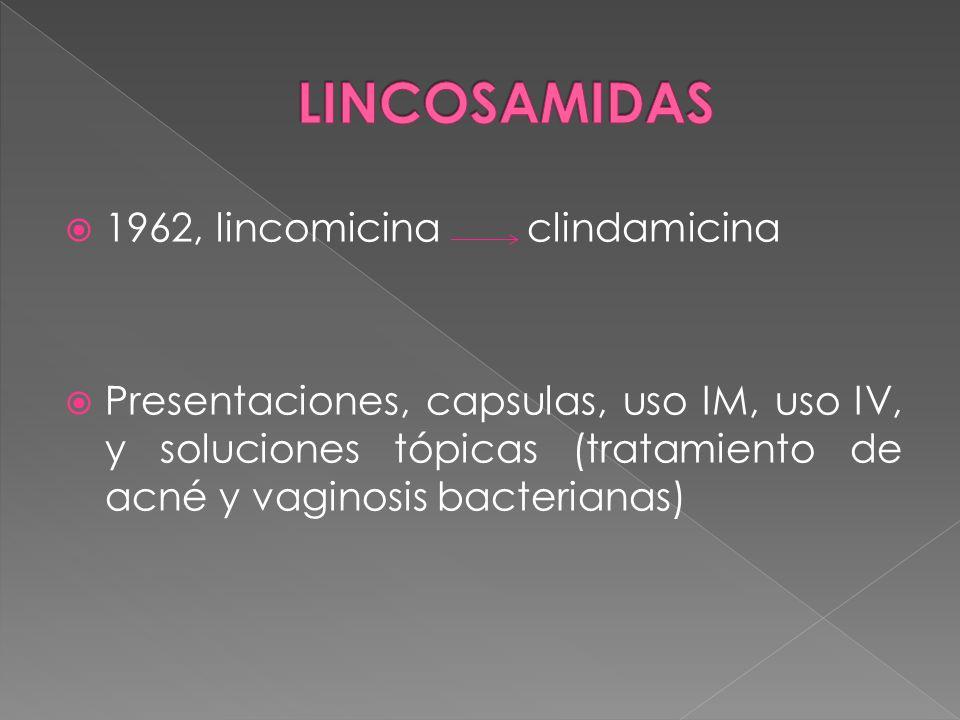 LINCOSAMIDAS 1962, lincomicina clindamicina