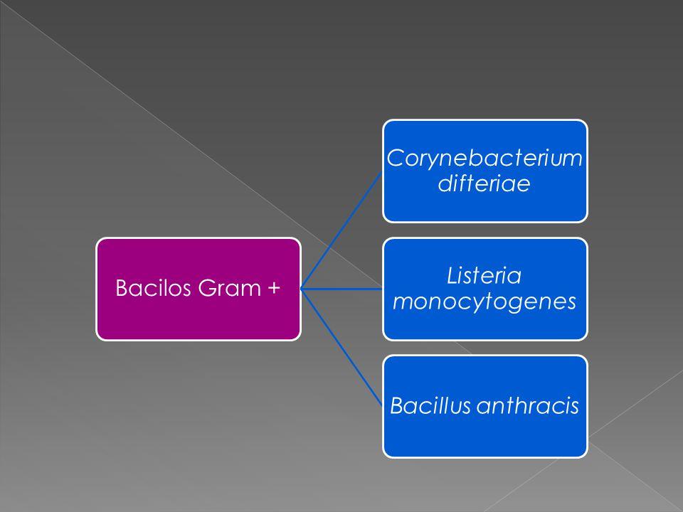 Corynebacterium difteriae Listeria monocytogenes Bacillus anthracis