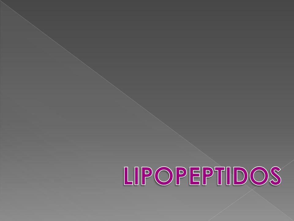 LIPOPEPTIDOS