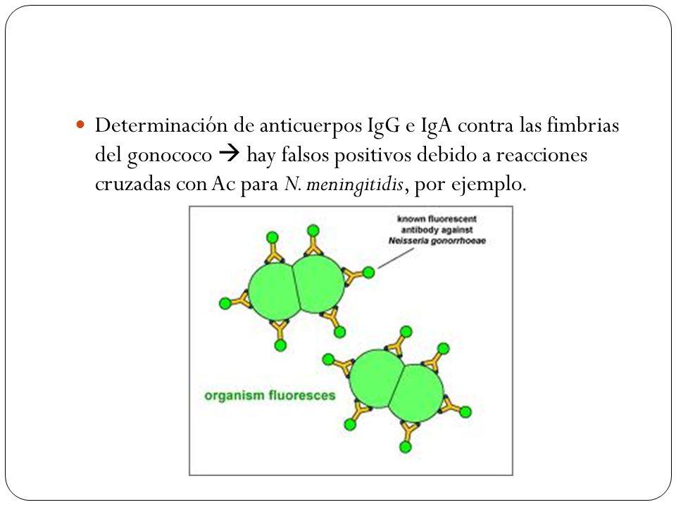 Determinación de anticuerpos IgG e IgA contra las fimbrias del gonococo  hay falsos positivos debido a reacciones cruzadas con Ac para N.