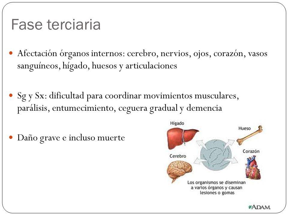 Fase terciaria Afectación órganos internos: cerebro, nervios, ojos, corazón, vasos sanguíneos, hígado, huesos y articulaciones.