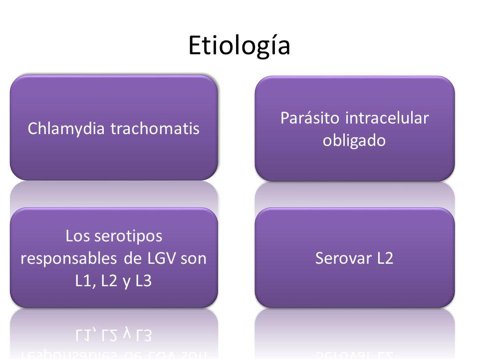 Etiología Parásito intracelular obligado Chlamydia trachomatis