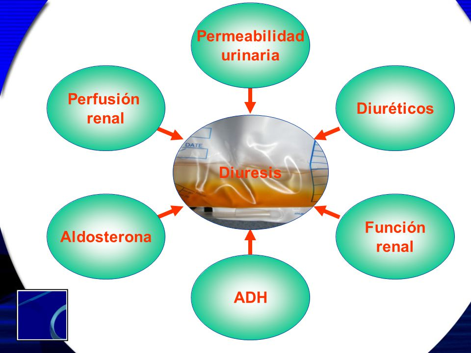Permeabilidad urinaria Perfusión renal Diuréticos Diuresis Aldosterona Función renal ADH