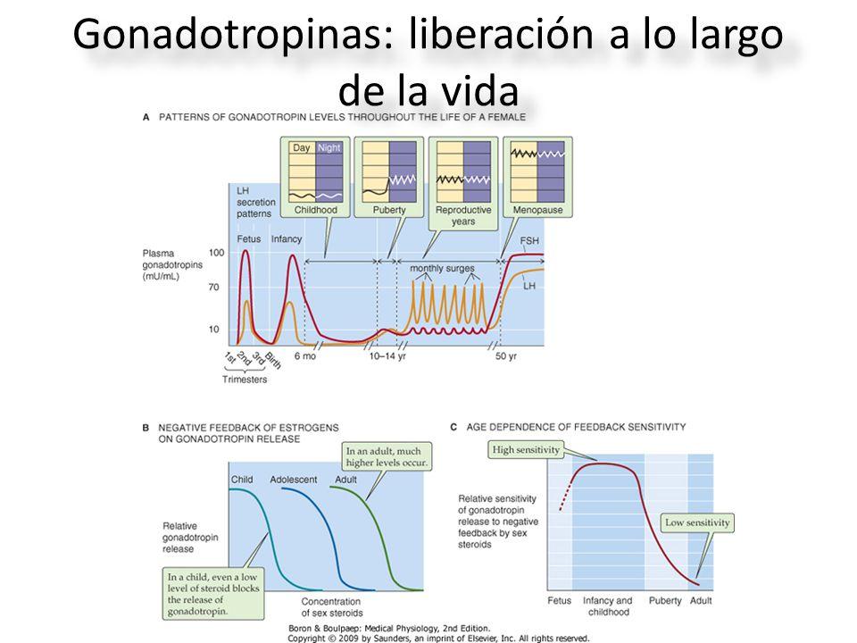 Gonadotropinas: liberación a lo largo de la vida