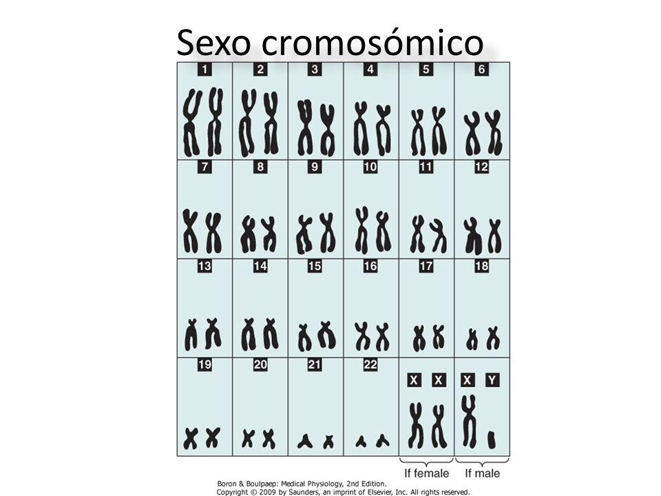 Sexo cromosómico