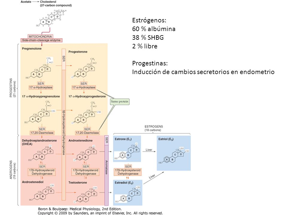 Estrógenos: 60 % albúmina. 38 % SHBG. 2 % libre.