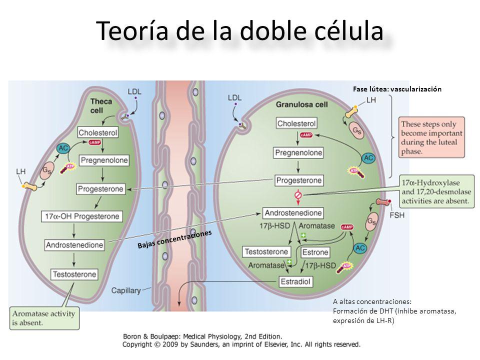 Teoría de la doble célula
