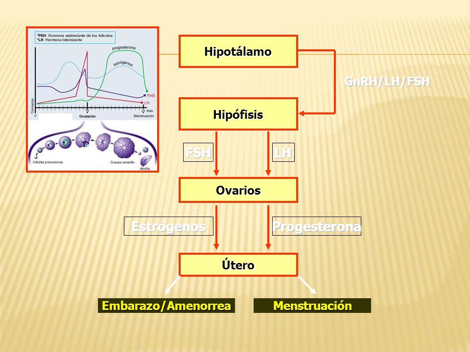 FSH LH Estrógenos Progesterona