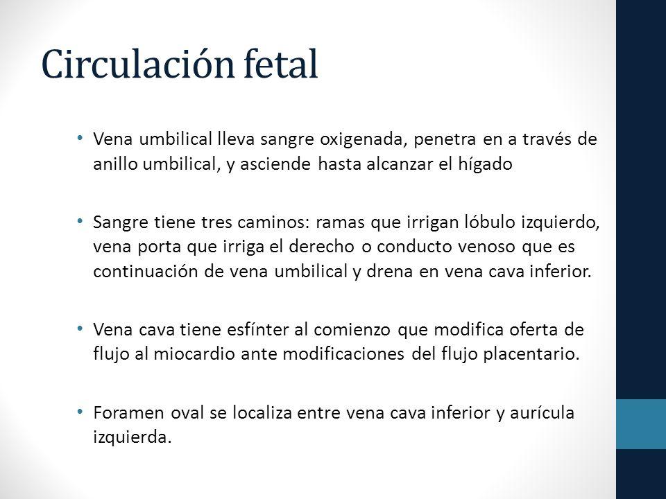 Circulación fetal Vena umbilical lleva sangre oxigenada, penetra en a través de anillo umbilical, y asciende hasta alcanzar el hígado.