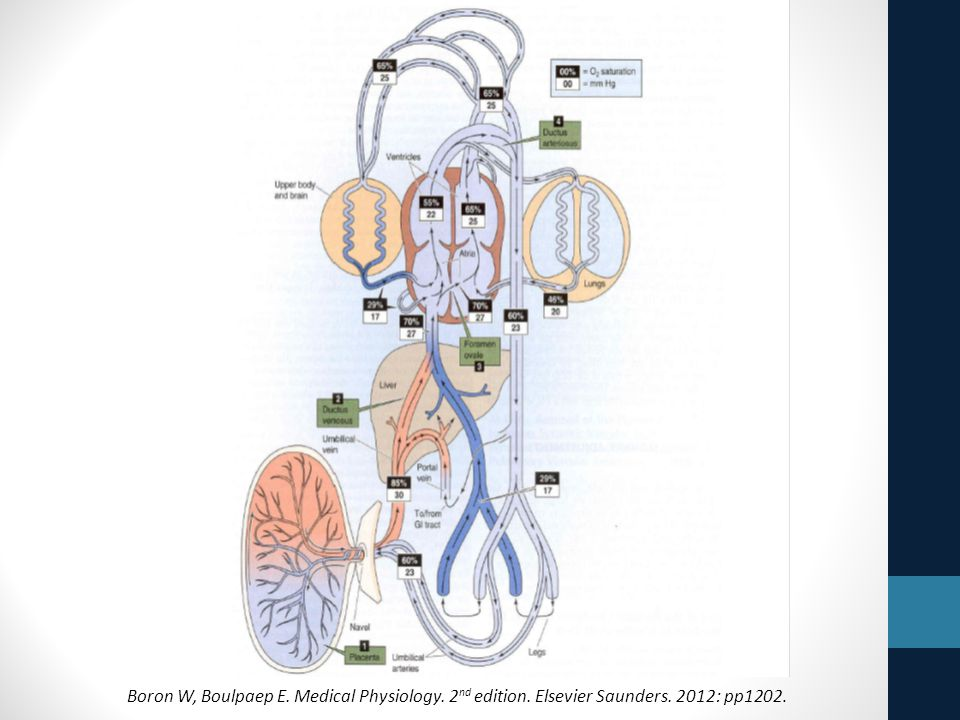 Boron W, Boulpaep E. Medical Physiology. 2nd edition. Elsevier Saunders. 2012: pp1202.
