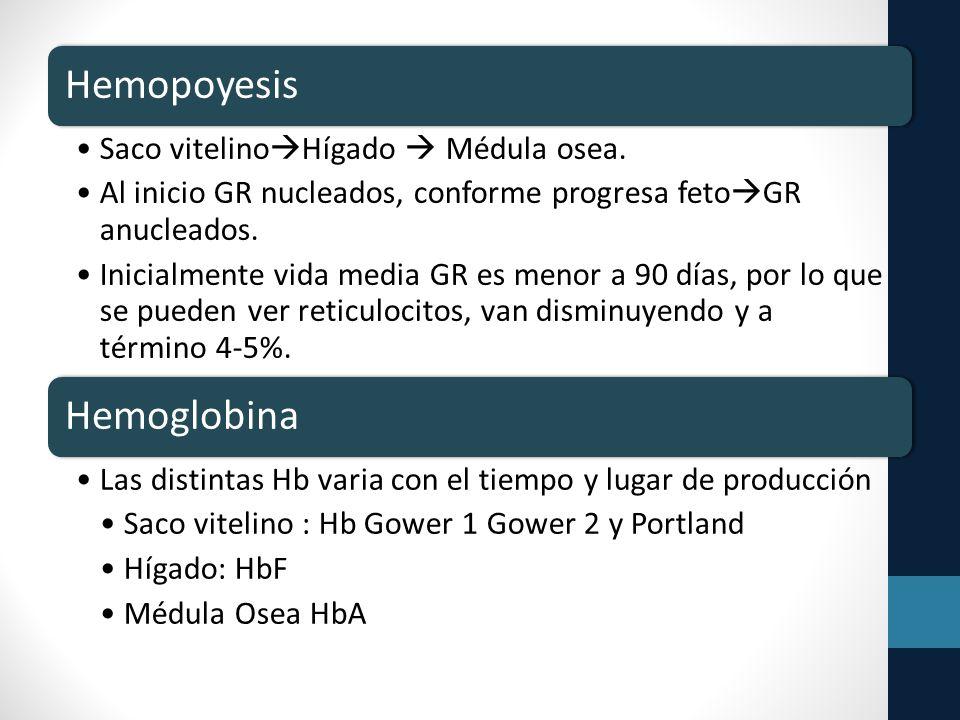 Hemopoyesis Hemoglobina Saco vitelinoHígado  Médula osea.