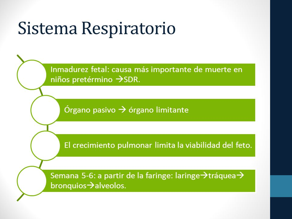 Sistema Respiratorio Inmadurez fetal: causa más importante de muerte en niños pretérmino SDR. Órgano pasivo  órgano limitante.