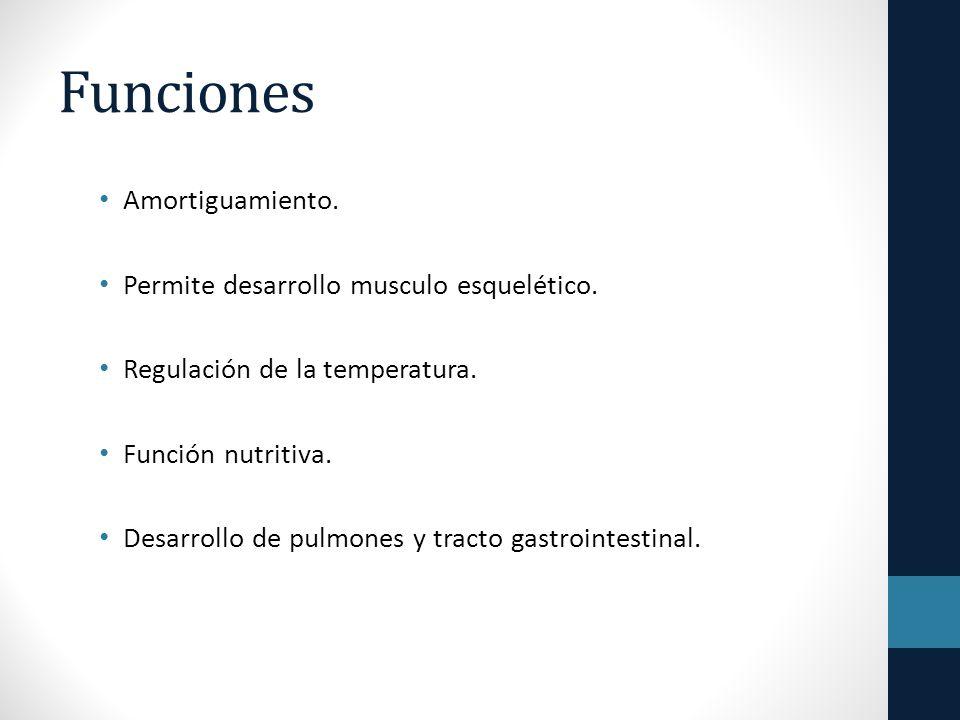 Funciones Amortiguamiento. Permite desarrollo musculo esquelético.