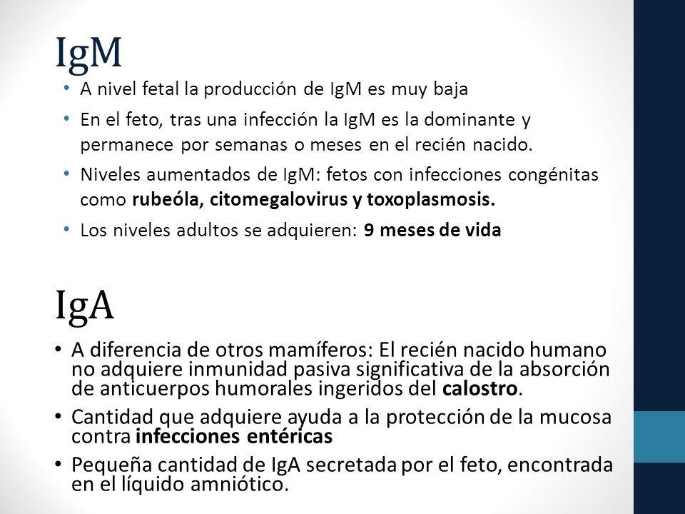 IgM A nivel fetal la producción de IgM es muy baja.