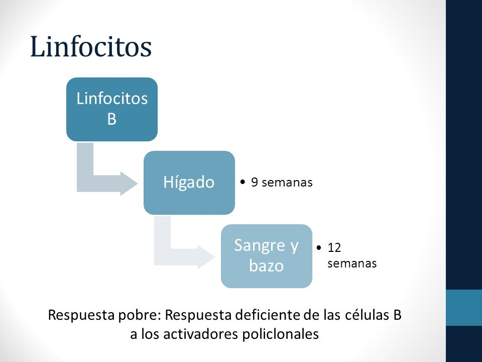 Linfocitos Linfocitos B Hígado Sangre y bazo