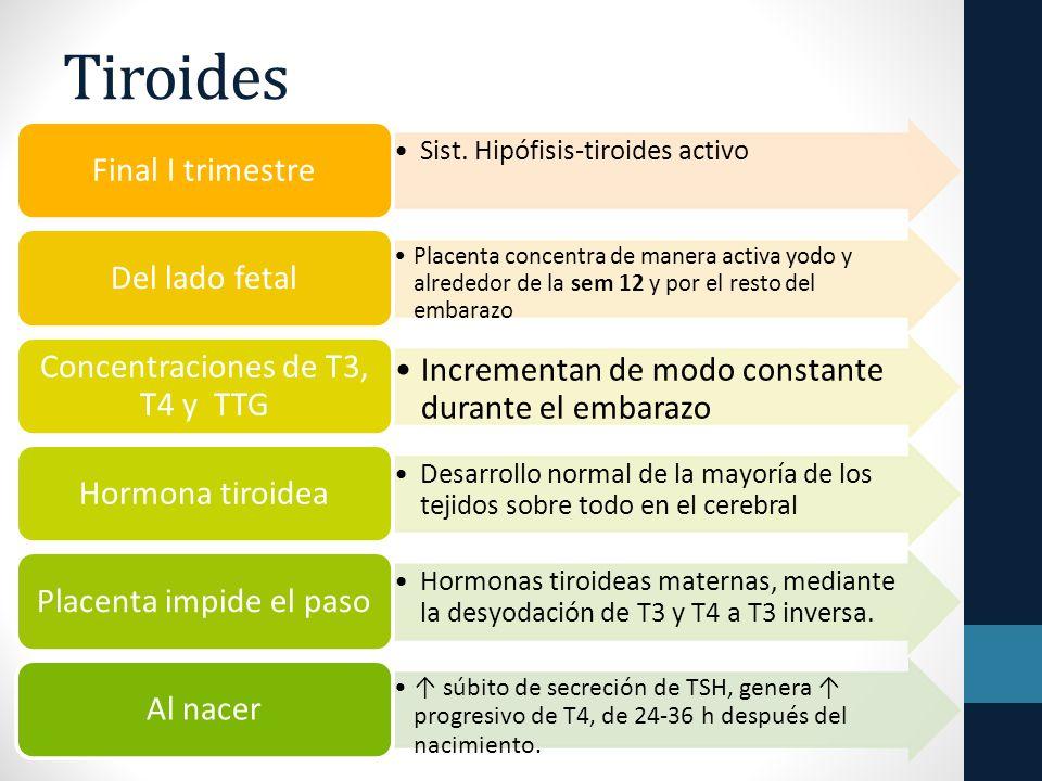 Tiroides Incrementan de modo constante durante el embarazo