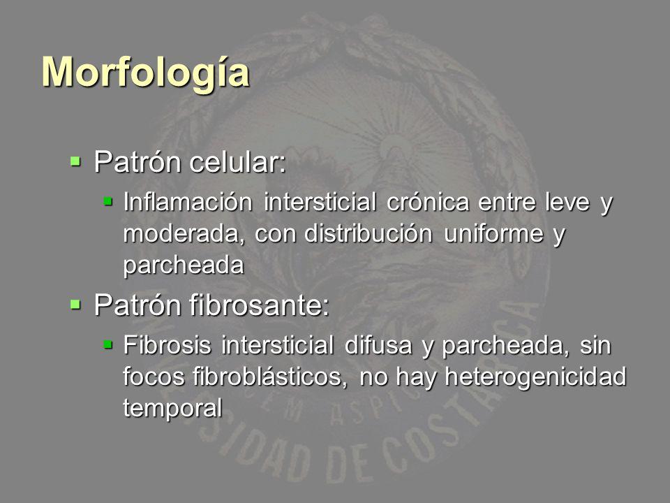 Morfología Patrón celular: Patrón fibrosante: