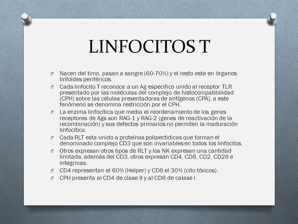 LINFOCITOS T Nacen del timo, pasan a sangre (60-70%) y el resto esta en órganos linfoides periféricos.