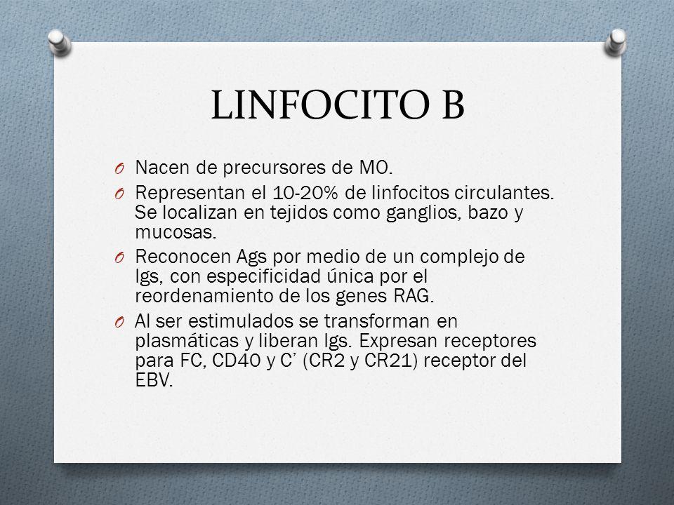 LINFOCITO B Nacen de precursores de MO.