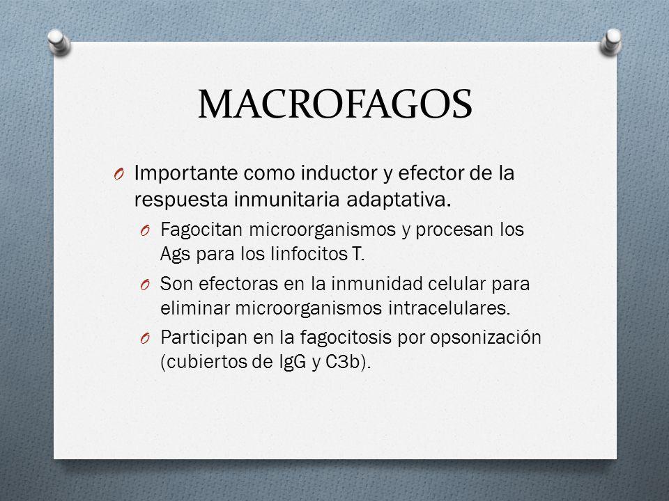 MACROFAGOS Importante como inductor y efector de la respuesta inmunitaria adaptativa.