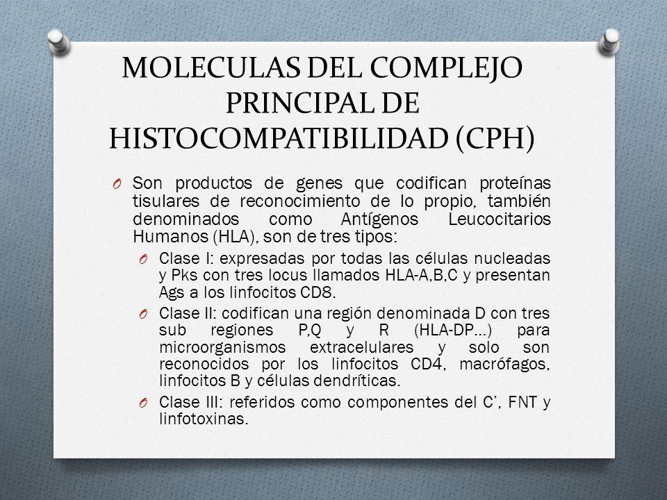 MOLECULAS DEL COMPLEJO PRINCIPAL DE HISTOCOMPATIBILIDAD (CPH)