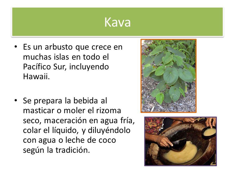 Kava Es un arbusto que crece en muchas islas en todo el Pacífico Sur, incluyendo Hawaii.
