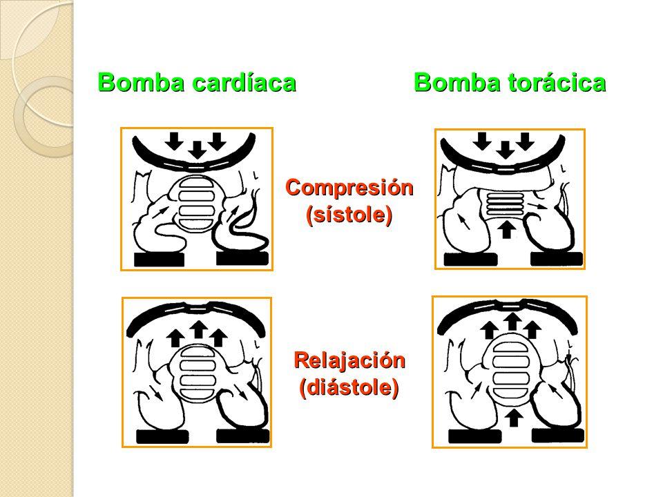 Bomba cardíaca Bomba torácica Compresión (sístole) Relajación