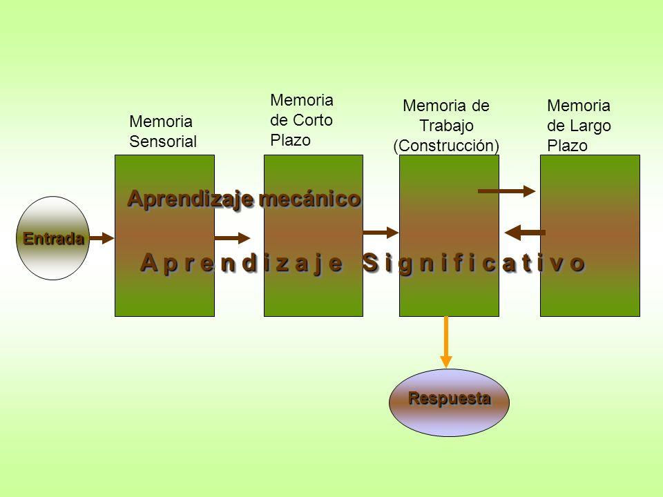 Memoria de Trabajo (Construcción)