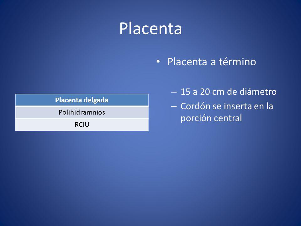 Placenta Placenta a término 15 a 20 cm de diámetro