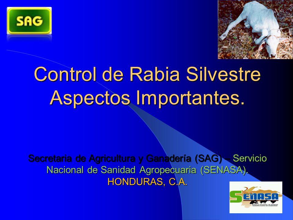 Control de Rabia Silvestre Aspectos Importantes
