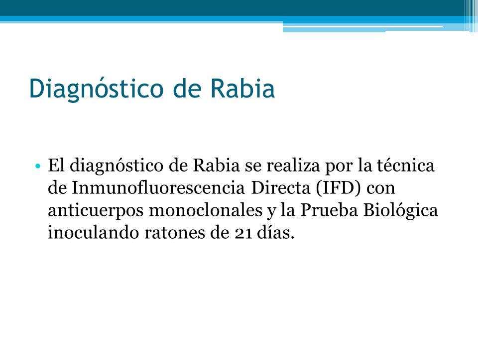 Diagnóstico de Rabia