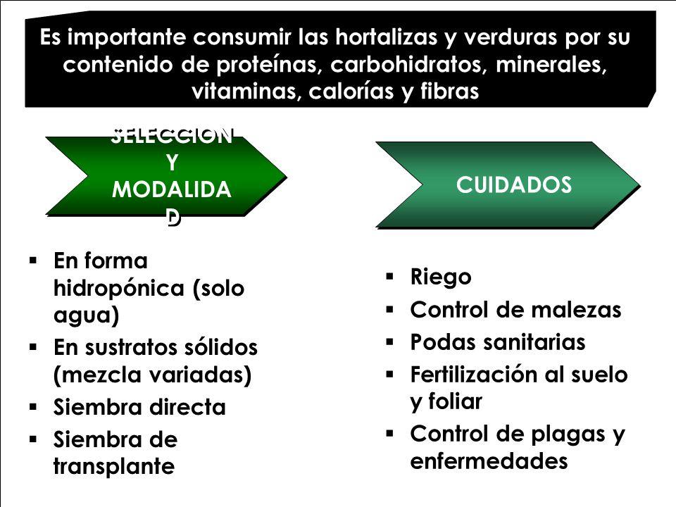 Es importante consumir las hortalizas y verduras por su contenido de proteínas, carbohidratos, minerales, vitaminas, calorías y fibras