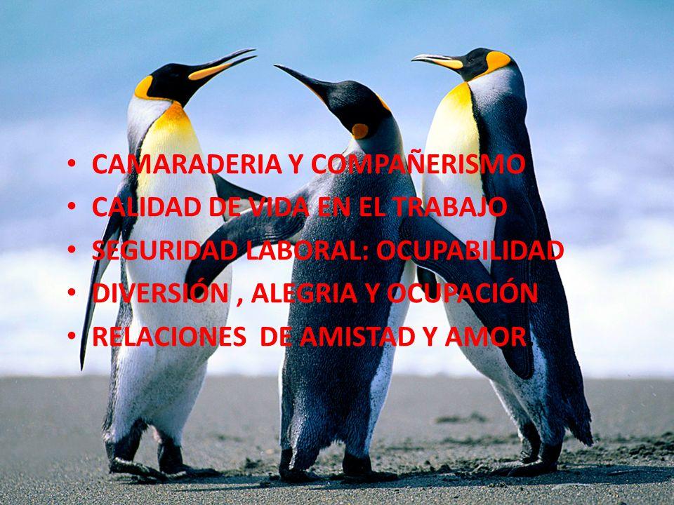 CAMARADERIA Y COMPAÑERISMO