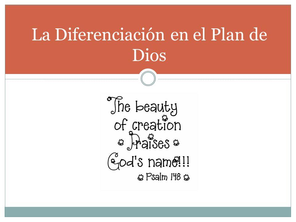 La Diferenciación en el Plan de Dios