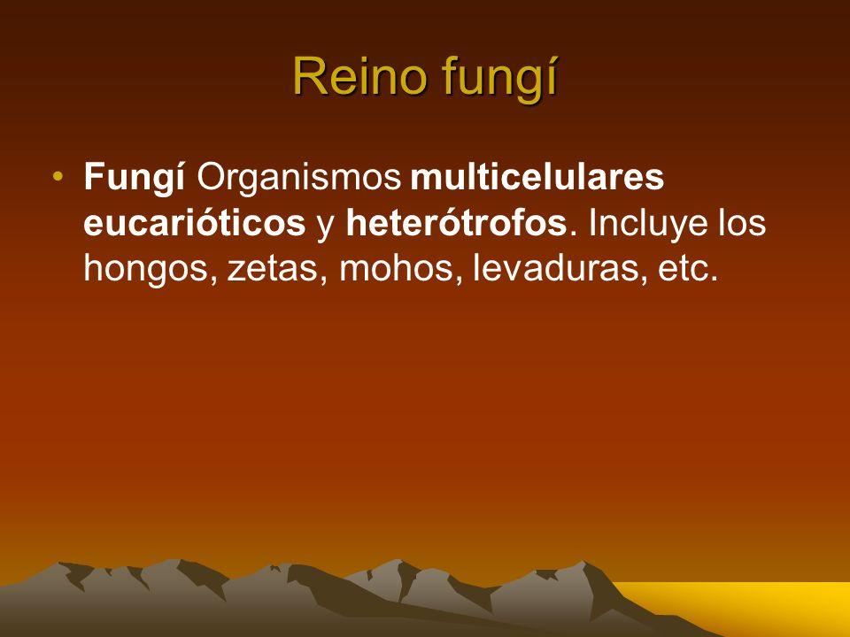 Reino fungí Fungí Organismos multicelulares eucarióticos y heterótrofos.