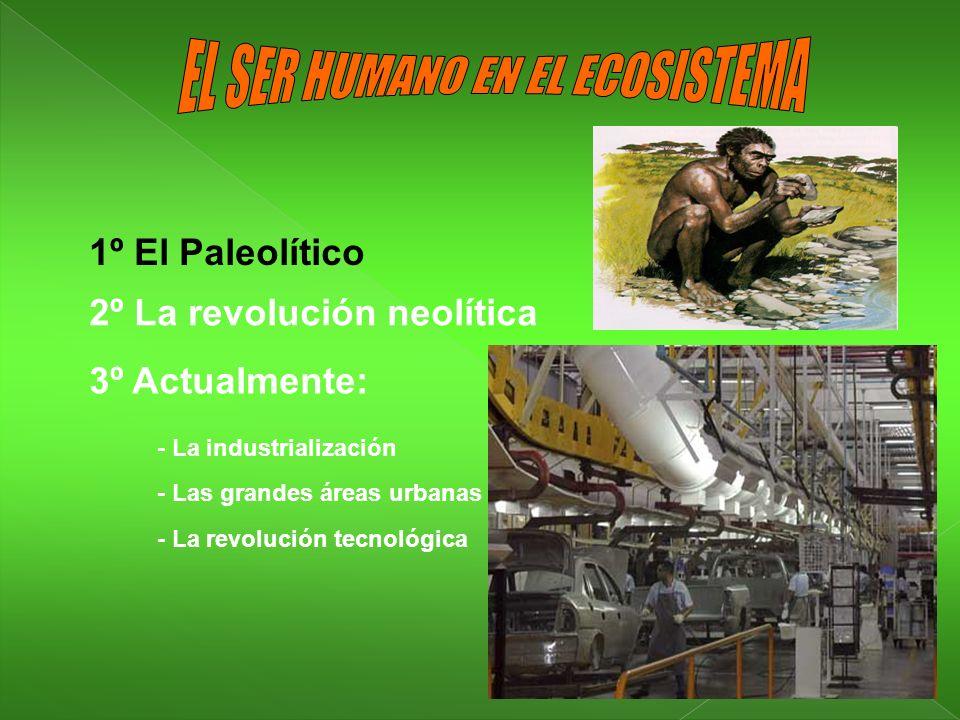 EL SER HUMANO EN EL ECOSISTEMA