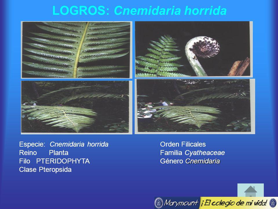 LOGROS: Cnemidaria horrida