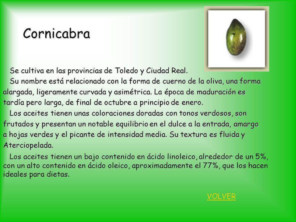 Cornicabra Se cultiva en las provincias de Toledo y Ciudad Real.
